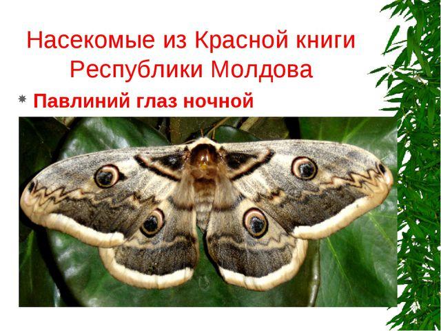 Насекомые из Красной книги Республики Молдова Павлиний глаз ночной