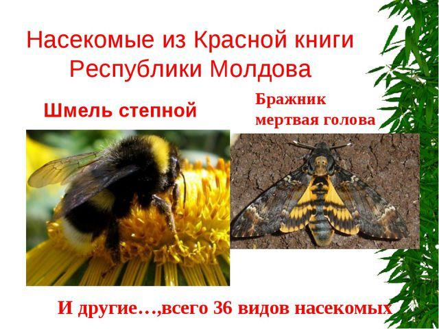 Насекомые из Красной книги Республики Молдова Шмель степной Бражник мертвая...