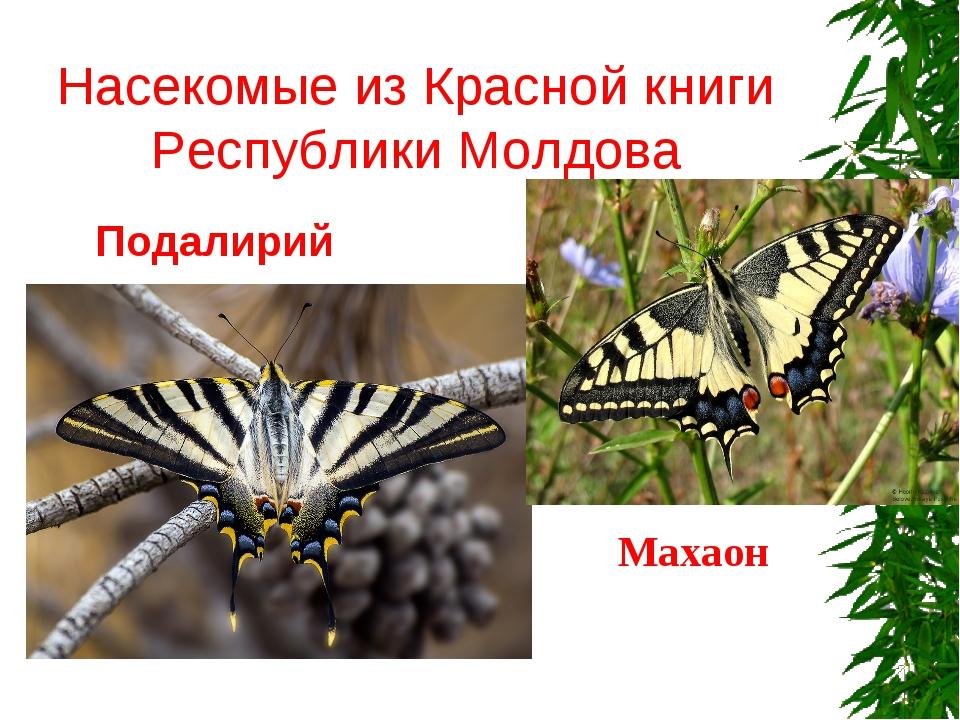 Насекомые из Красной книги Республики Молдова Подалирий Махаон