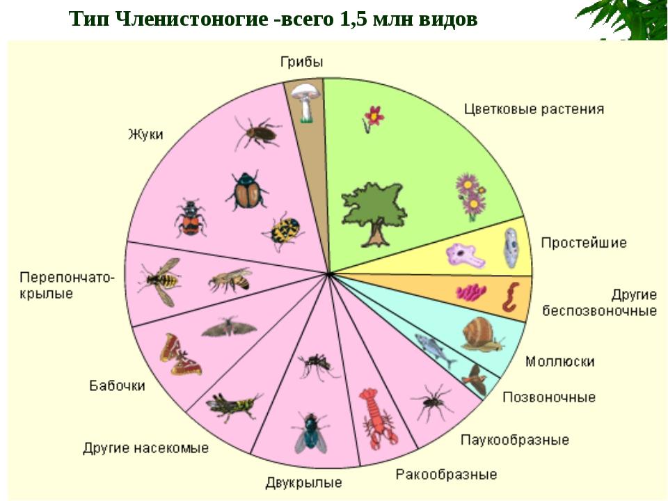 Тип Членистоногие -всего 1,5 млн видов