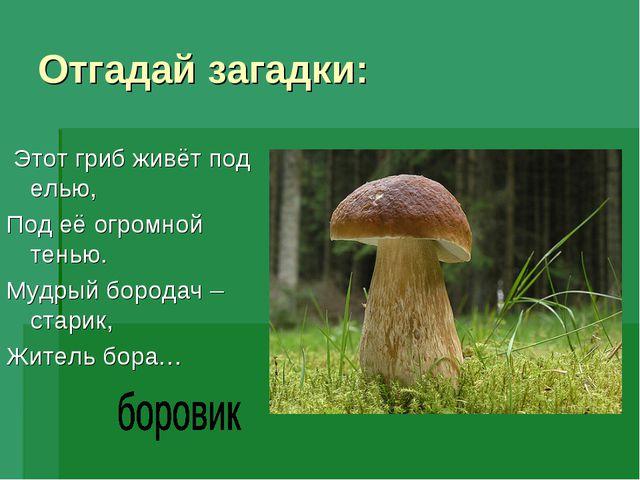 Отгадай загадки: Этот гриб живёт под елью, Под её огромной тенью. Мудрый боро...
