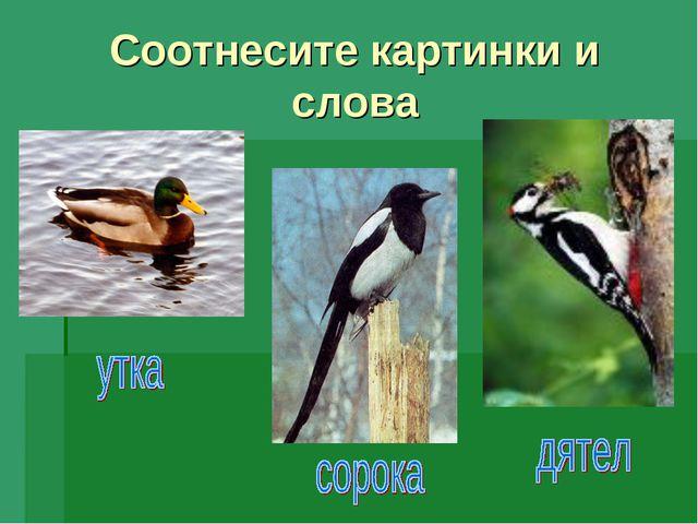 Соотнесите картинки и слова