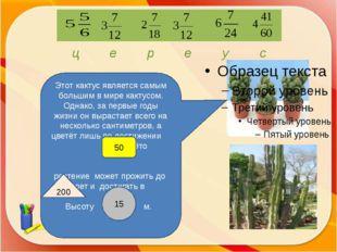 http://aida.ucoz.ru Этот кактус является самым большим в мире кактусом. Одна