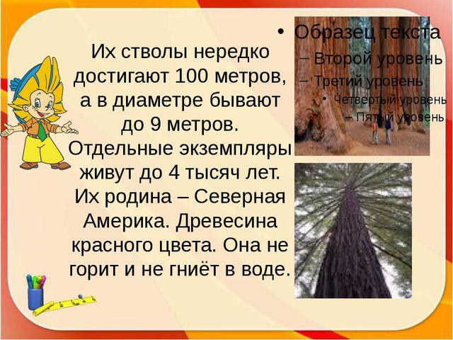 Их стволы нередко достигают 100 метров, а в диаметре бывают до 9 метров. Отде...