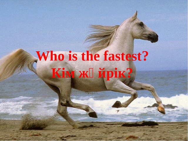 Who is the fastest? Кім жүйрік?