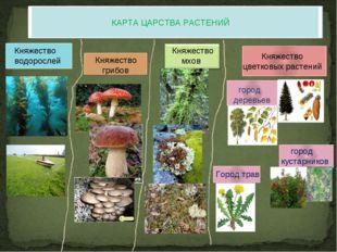 КАРТА ЦАРСТВА РАСТЕНИЙ Княжество водорослей Княжество грибов Княжество мхов