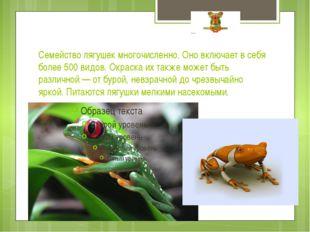 Семейство лягушек многочисленно. Оно включает в себя более 500 видов. Окраска