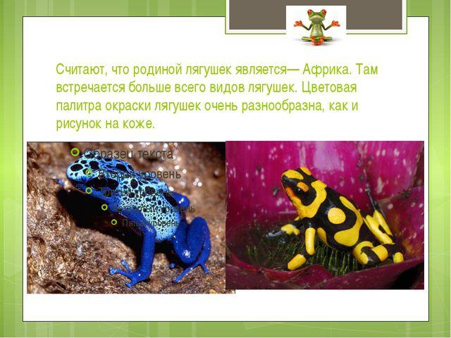 Считают, что родиной лягушек является— Африка. Там встречается больше всего в...