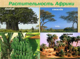 баобаб пальма секвойи Растительность Африки бананы