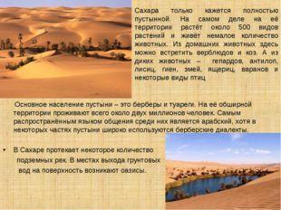 Сахара только кажется полностью пустынной. На самом деле на её территории рас