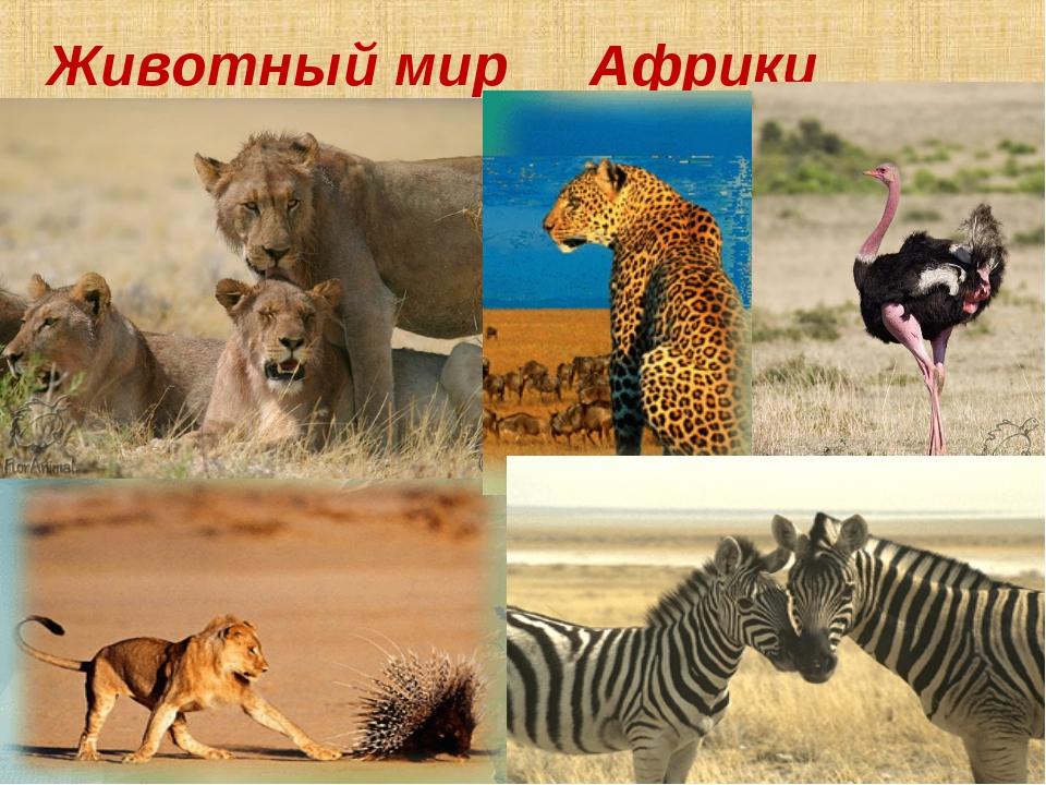 животный мир африки картинки для презентации аксессуары хабаровске, купить