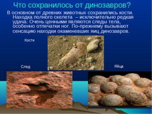 Что сохранилось от динозавров? В основном от древних животных сохранились ко