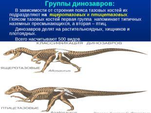 Группы динозавров: В зависимости от строения пояса тазовых костей их подразд