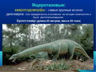 Ящеротазовые: завроподоморфы - самые крупные из всех динозавров. Они передвиг