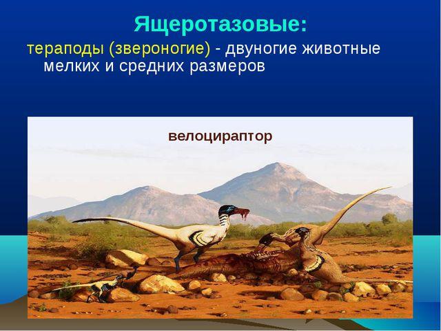 Ящеротазовые: тераподы (звероногие) - двуногие животные мелких и средних разм...