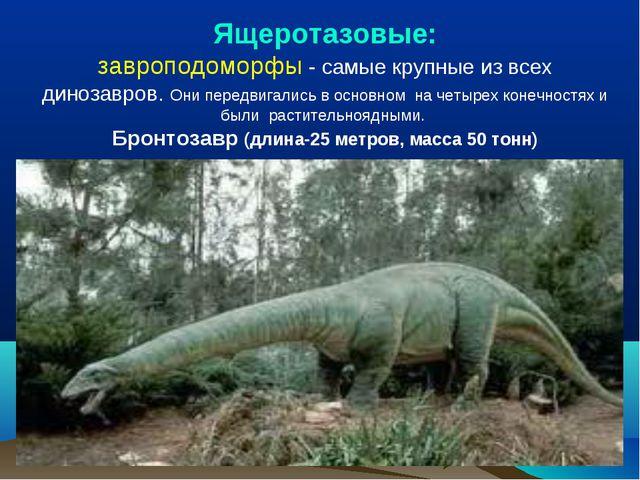 Ящеротазовые: завроподоморфы - самые крупные из всех динозавров. Они передвиг...