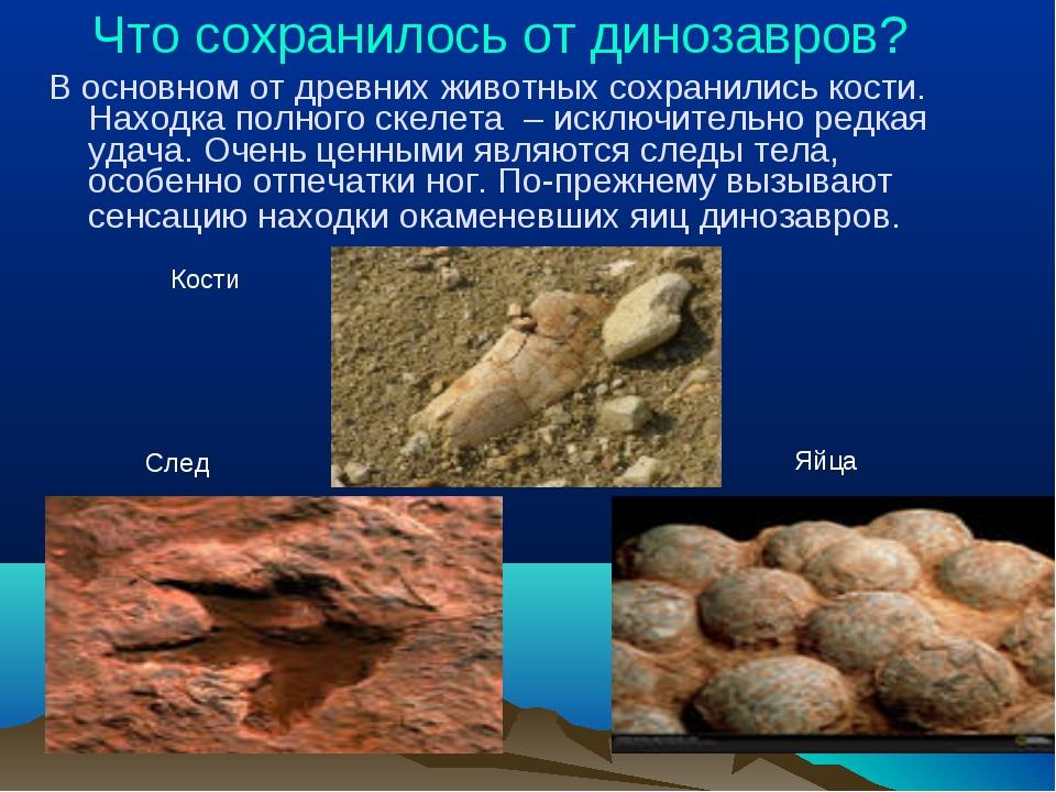 Что сохранилось от динозавров? В основном от древних животных сохранились ко...