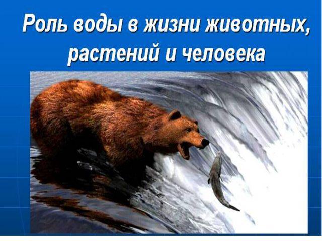 Вода в живых организмах