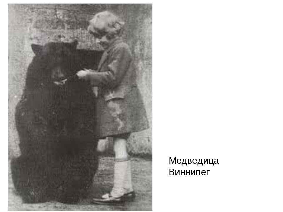 Медведица Виннипег