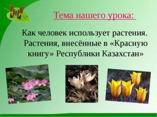 Как человек использует растения. Растения, внесённые в «Красную книгу» Респуб