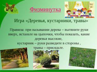 Физминутка Игра «Деревья, кустарники, травы» Правила: при назывании дерева –