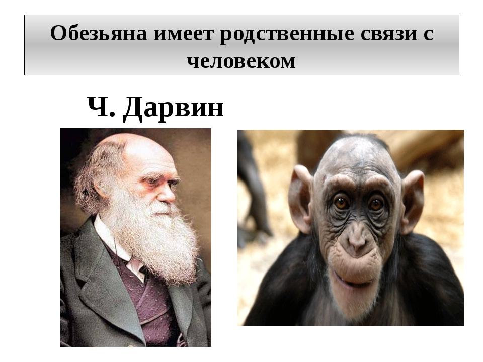 Обезьяна имеет родственные связи с человеком Ч. Дарвин