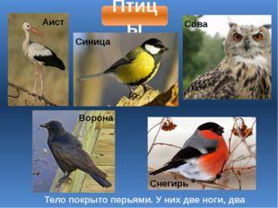 Птицы Тело покрыто перьями. У них две ноги, два крыла. Аист Синица Сова Ворон