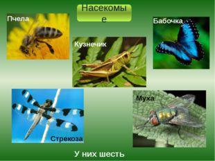 Насекомые У них шесть ног. Кузнечик Пчела Бабочка Стрекоза Муха