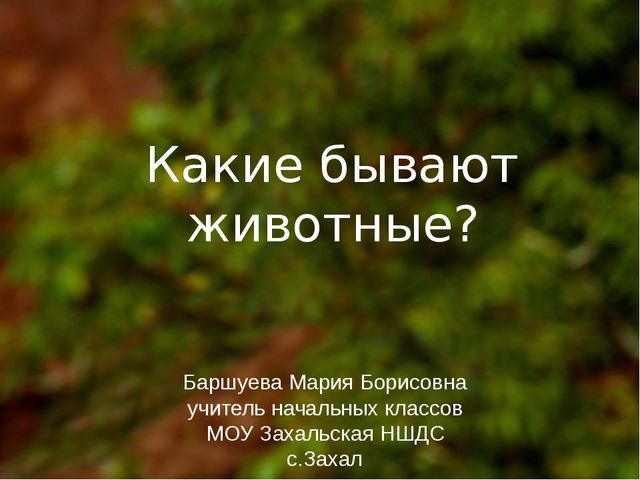 Какие бывают животные? Баршуева Мария Борисовна учитель начальных классов МО...