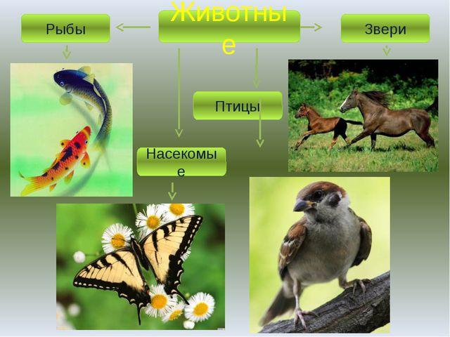 Животные Рыбы Звери Насекомые Птицы