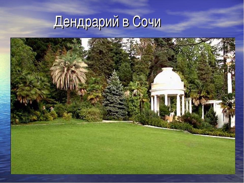 Дендрарий в Сочи