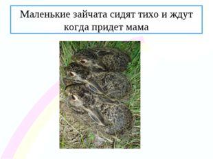 Маленькие зайчата сидят тихо и ждут когда придет мама