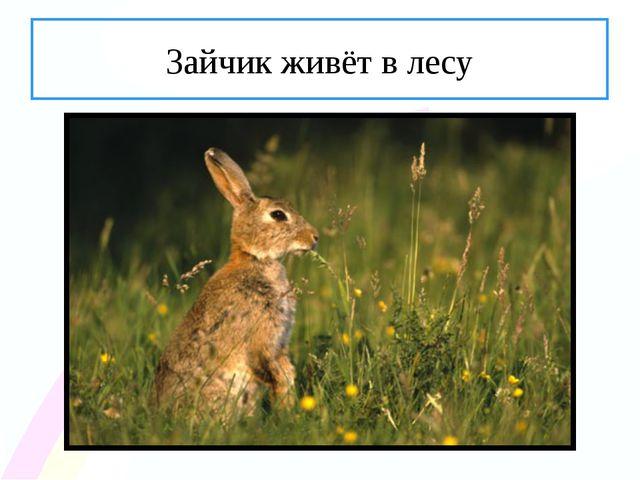 Зайчик живёт в лесу