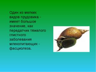 Один из мелких видов прудовика - имеет большое значение, как передатчик тяже