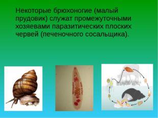 Некоторые брюхоногие (малый прудовик) служат промежуточными хозяевами парази