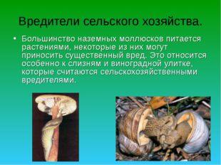 Вредители сельского хозяйства. Большинство наземных моллюсков питается растен