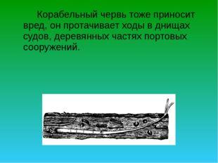 Корабельный червь тоже приносит вред, он протачивает ходы в днищах судов, д