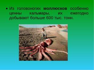 Из головоногих моллюсков особенно ценны кальмары, их ежегодно добывают больше