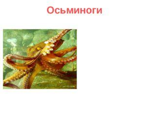 Осьминоги Осьминоги наслаждаются разнообразием красок планеты. У них цветно