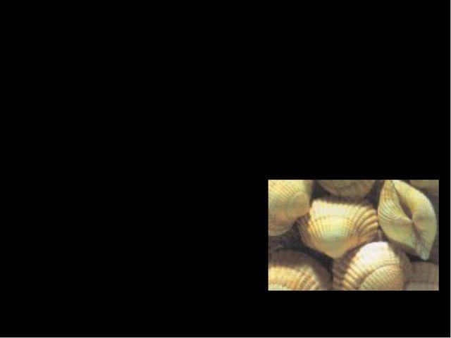 Двустворчатые моллюски  или просто ракушки, характеризуются наличием раковин...