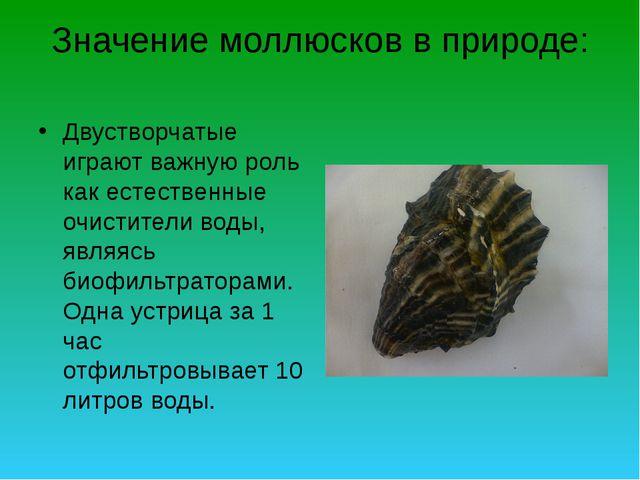 Значение моллюсков в природе: Двустворчатые играют важную роль как естественн...