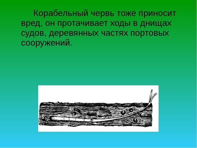 Корабельный червь тоже приносит вред, он протачивает ходы в днищах судов, д...