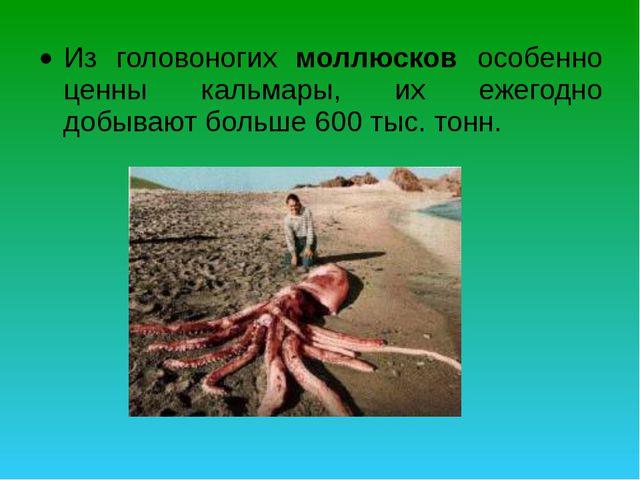 Из головоногих моллюсков особенно ценны кальмары, их ежегодно добывают больше...