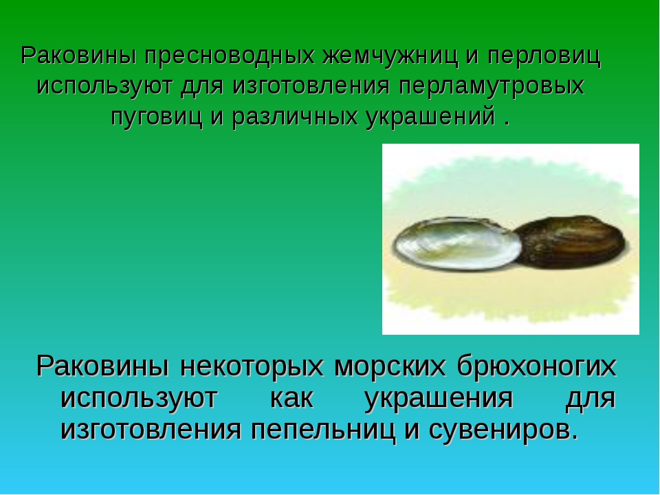 Раковины пресноводных жемчужниц и перловиц используют для изготовления перлам...