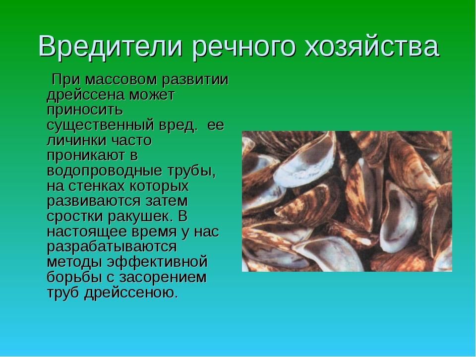 Вредители речного хозяйства  При массовом развитии дрейссена может приносить...