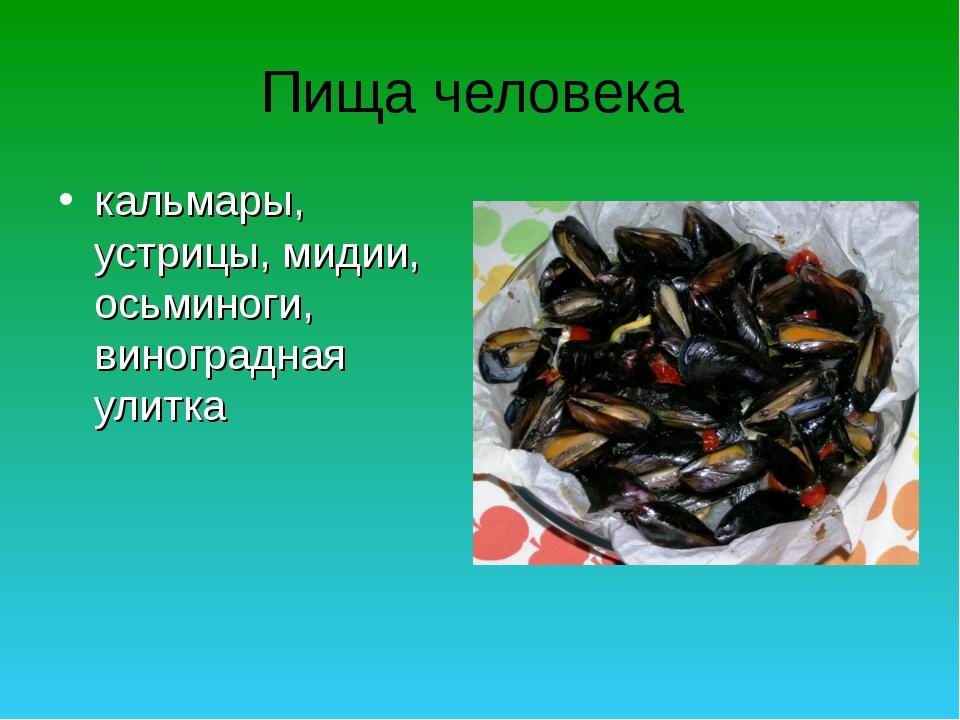 Пища человека кальмары, устрицы, мидии, осьминоги, виноградная улитка