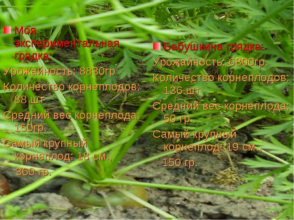 Моя экспериментальная грядка: Урожайность: 8830гр Количество корнеплодов: 88...