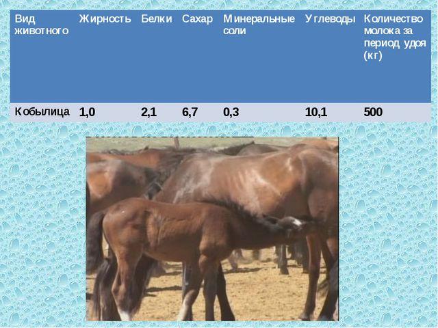 , Вид животногоЖирностьБелкиСахарМинеральные солиУглеводыКоличество мол...