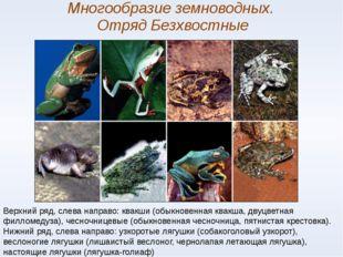 Многообразие земноводных. Отряд Безхвостные Верхний ряд, слева направо: квакш