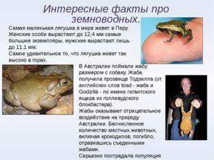 Интересные факты про земноводных. Самая маленькая лягушка в мире живет в Перу